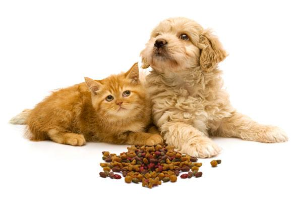 Choosing the right food for your pet.
